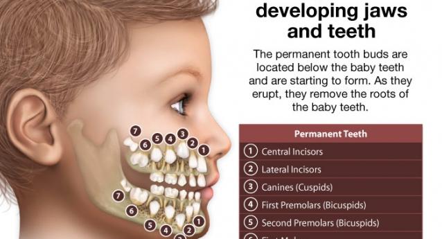 Μύθος Νο1:  Η τερηδόνα στα παιδικά δόντια δεν είναι πρόβλημα, γιατί θα αλλαχτούν.